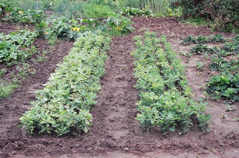 Длина огорода