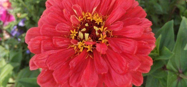 Летом было много прекрасных цветов